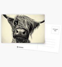Highland Cow Postcards