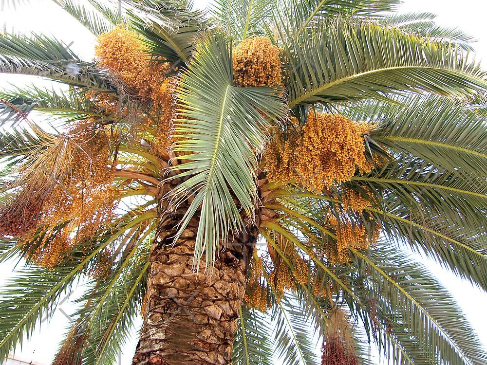Palm Tree by Tom Gomez