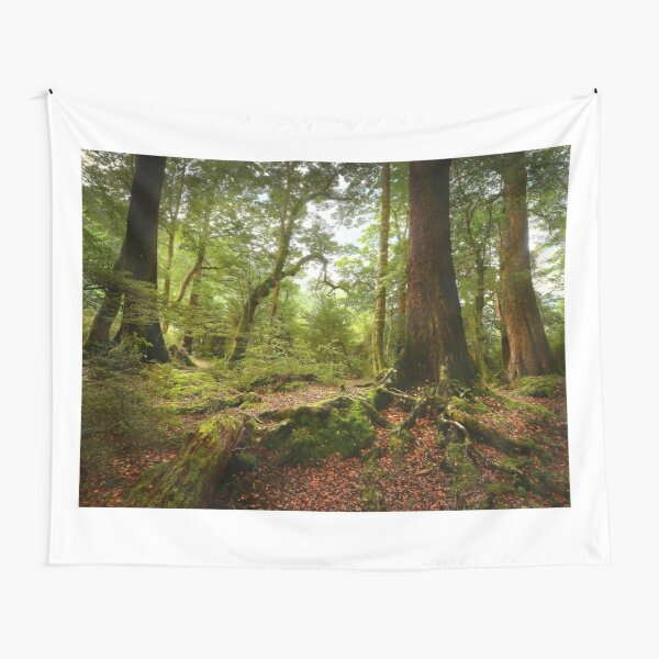 Red Beech forest, New Zealand Tapestry