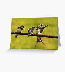 Oi...Get your OWN bird Greeting Card