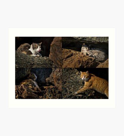 Wilde Katzen von Rainbow Harbor Kunstdruck