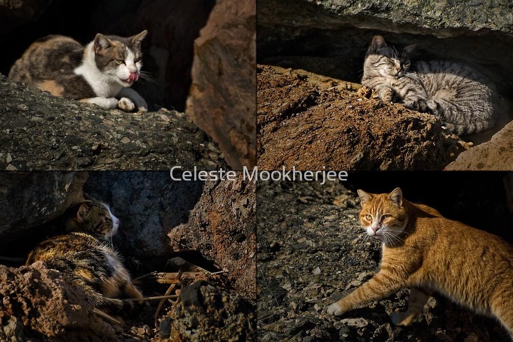 Wilde Katzen von Rainbow Harbor von Celeste Mookherjee