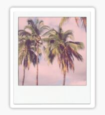 Palm Tree Polaroid Sticker