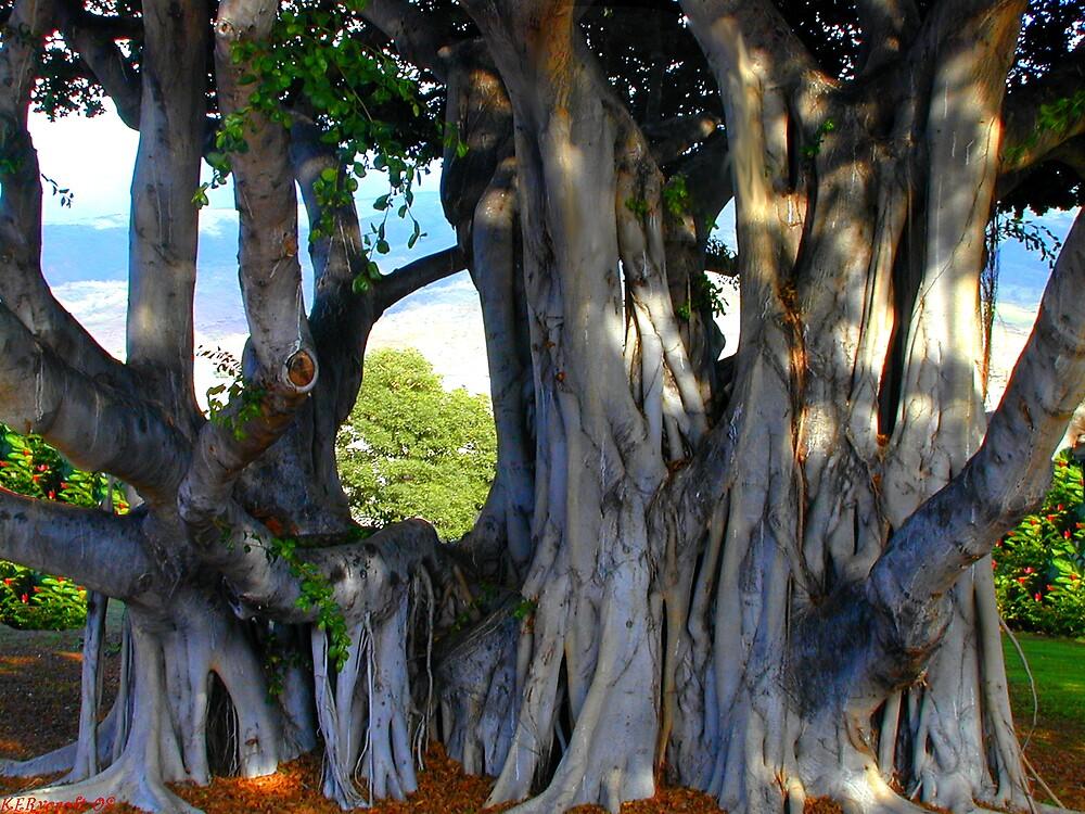 Maui Banyan by Kathryn Eve Rycroft