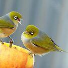 Hey You.. I Am Definitely Not Sharing!!  - Silver-Eye - NZ by AndreaEL