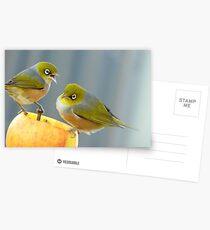 Hey You.. I Am Definitely Not Sharing!!  - Silver-Eye - NZ Postcards