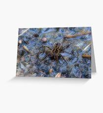 Wolf Spider Greeting Card
