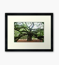 The Angel Oak Tree Framed Print