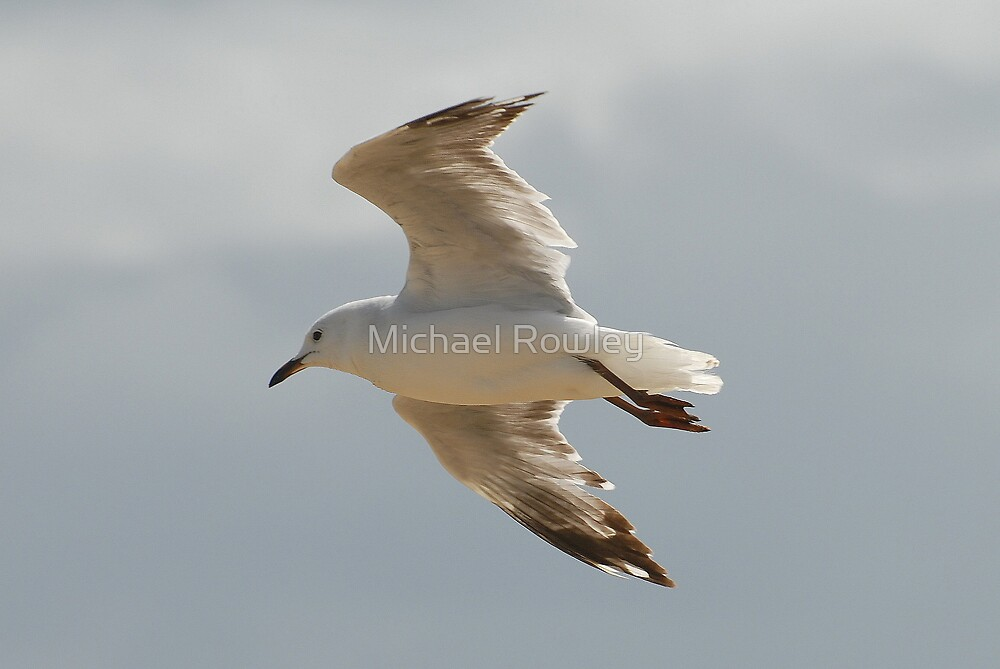 Flying High by Michael Rowley