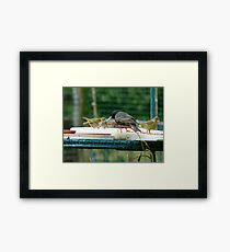 Are You My Wet-Nurse? - Silver-Eye/Starling - NZ Framed Print