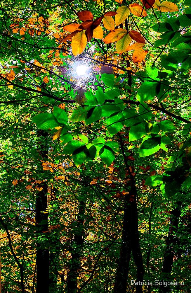 Autumn Sunlight by Patricia Bolgosano