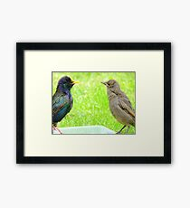 Monkey See, Monkey Do... - Starlings - NZ Framed Print
