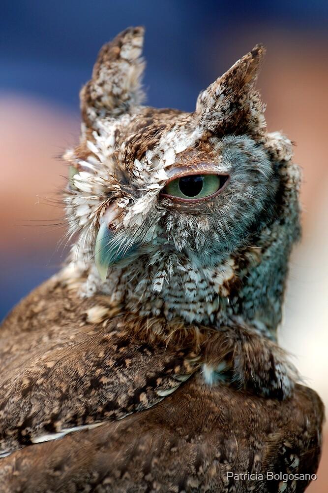Screech Owl by Patricia Bolgosano