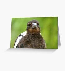Did You Bring A Fresh Grub? - Baby Magpie - NZ Greeting Card