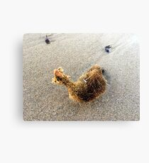 Sponge on beach Canvas Print