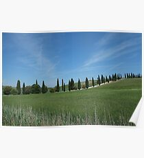 Cypress Trees in Tuscany Poster