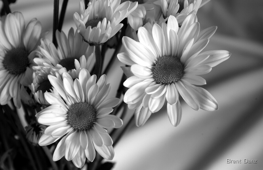 Black and White Daisies by Brent  Danz