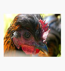 Do You Really Think These Streaks Make Me Look Young - Chicken - NZ Photographic Print