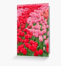 Flower beds of red and pink tulips Greeting Card