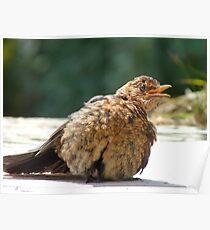 If I Sunbathe Long Enough I'll Turn Into A Blackbird - NZ Poster