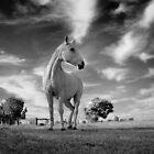 Upstanding grey by Penny Kittel