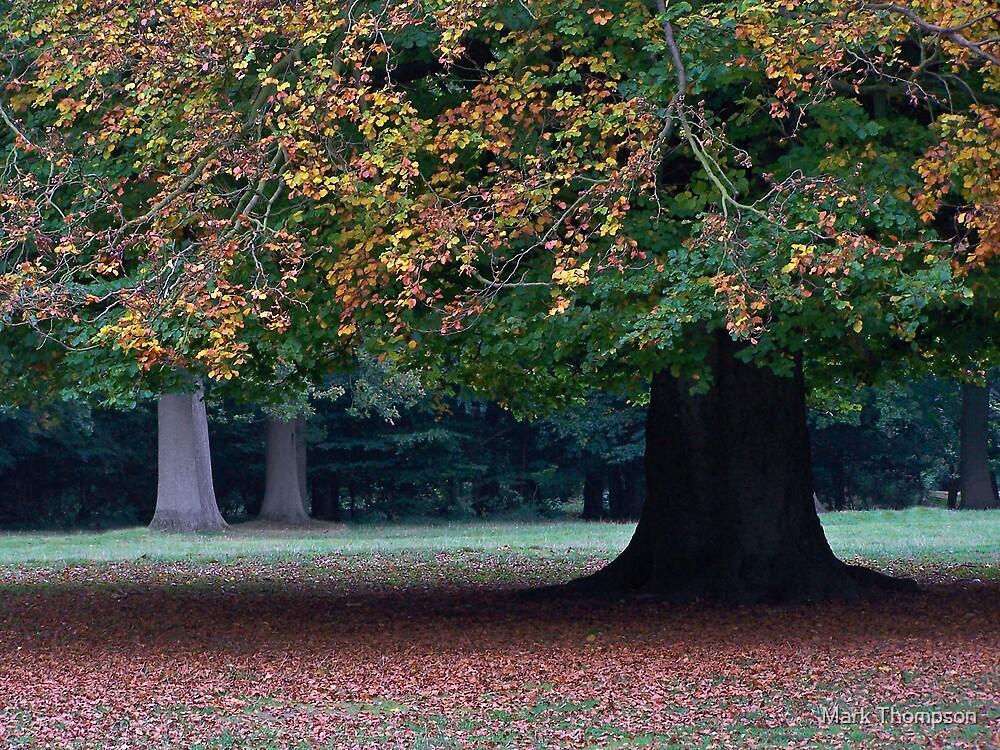 autumn colours by Mark Thompson