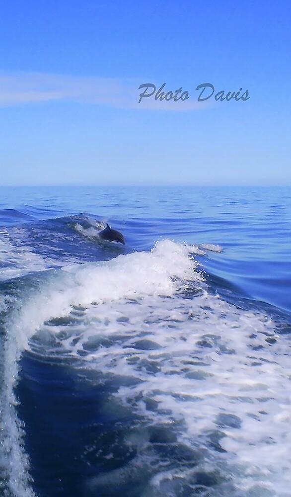 Costa Rica Dolphin by Gosha Davis