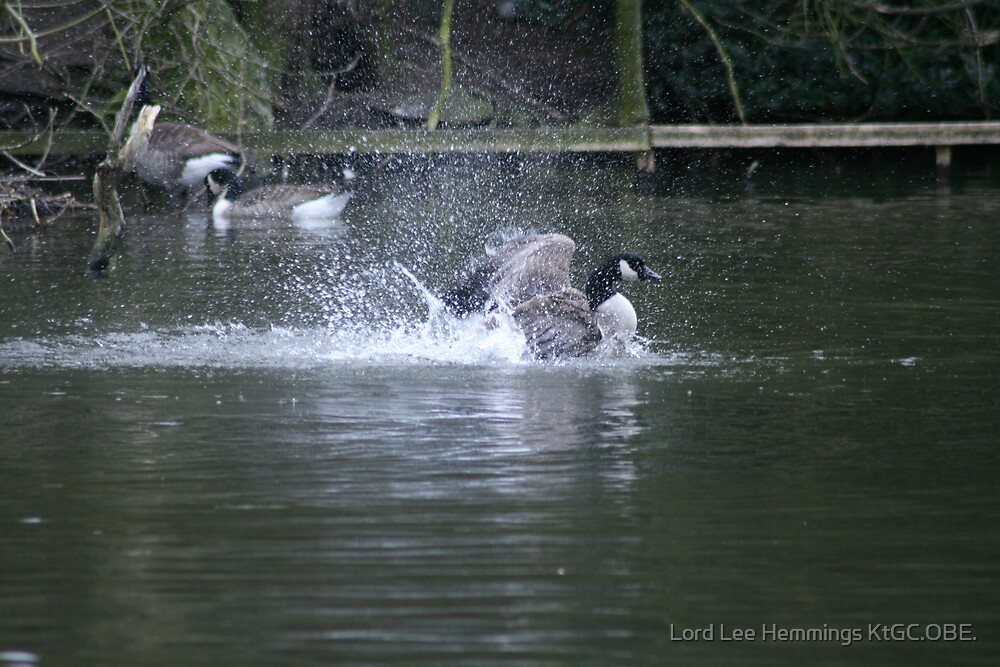 Bath time duck by Lord Lee Hemmings KtGC.OBE.