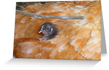 I Love Grandma's Feather Bed!!! - Chick - NZ by AndreaEL