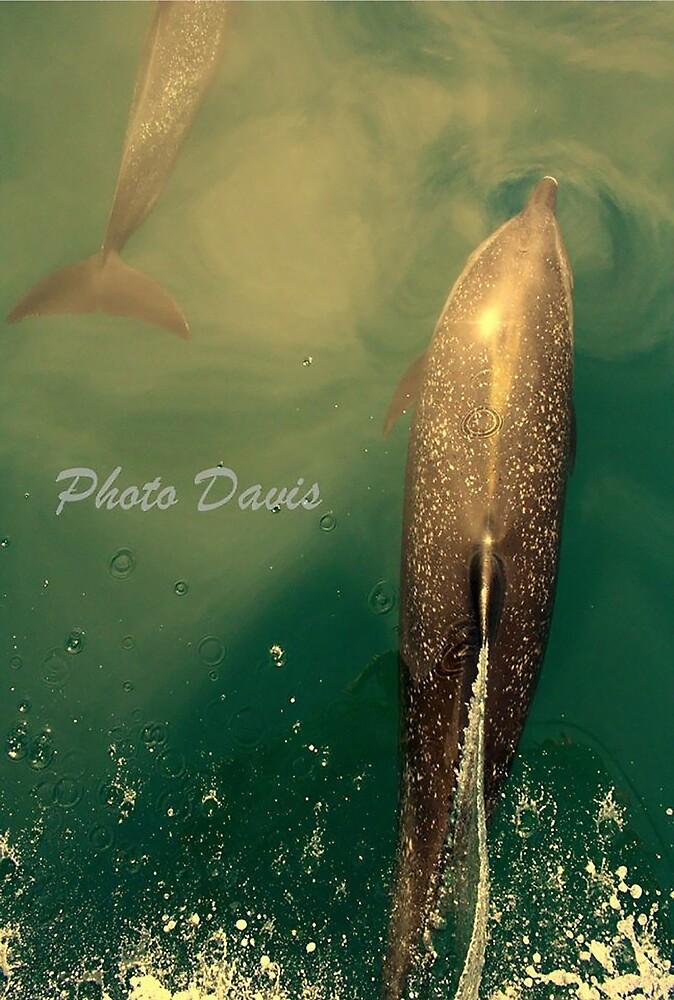 Costa Rica Dolphins by Gosha Davis
