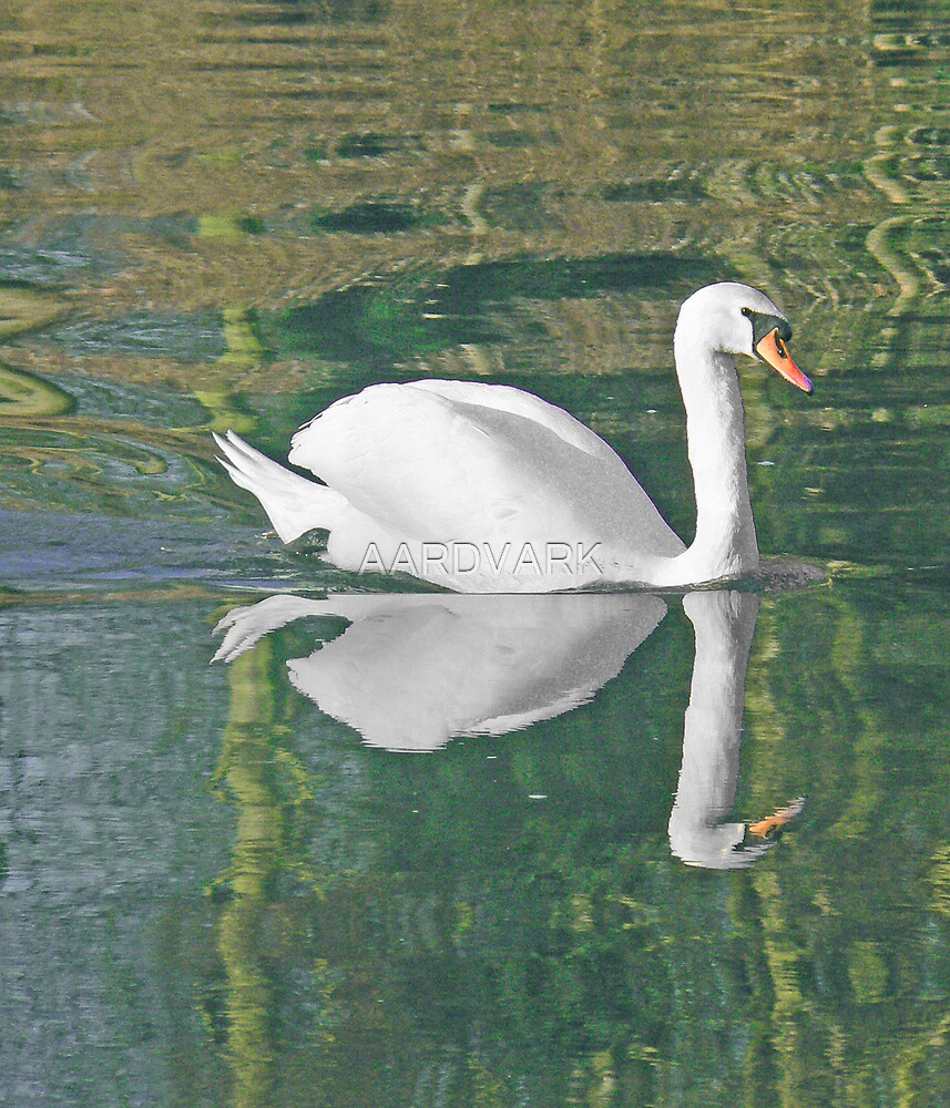 A Mute Swan And It's Reflecion by AARDVARK