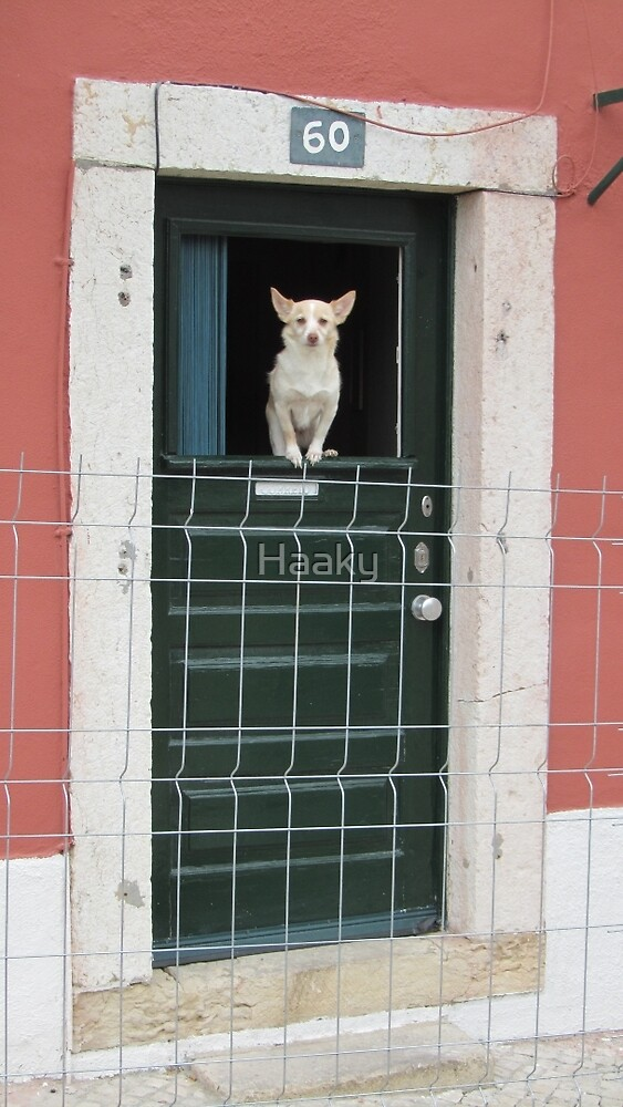 Doggy in the Window by Haaky