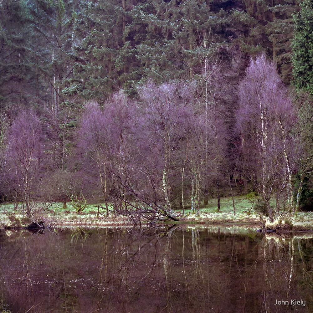 Birch trees, Ennerdale by John Kiely
