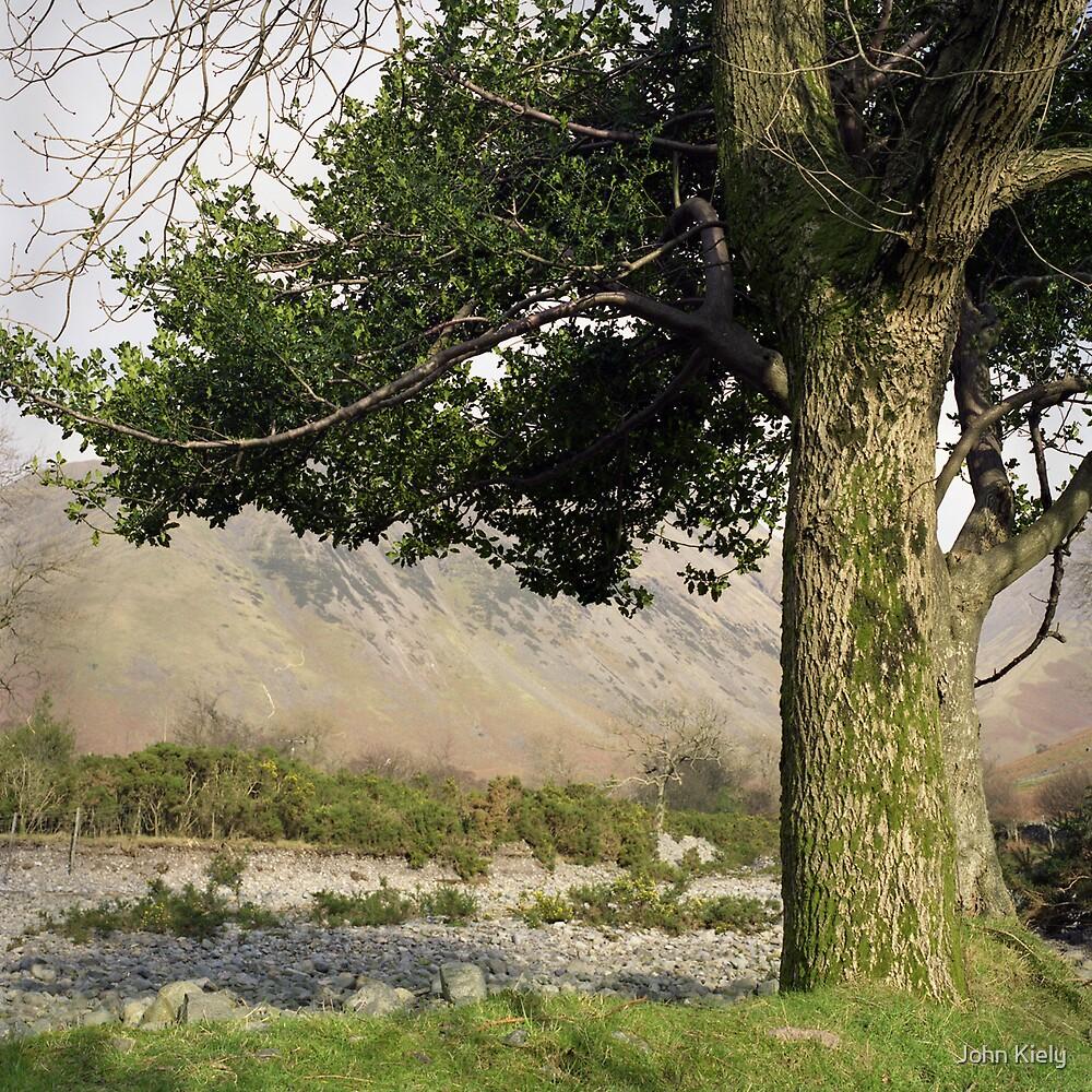 Holly Tree, Wasdale by John Kiely