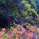 WV wildflowers by Sandra Hopko