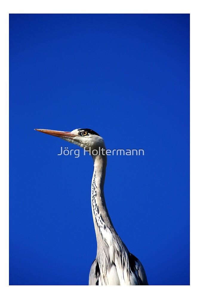 Grey Heron 2 by Jörg Holtermann