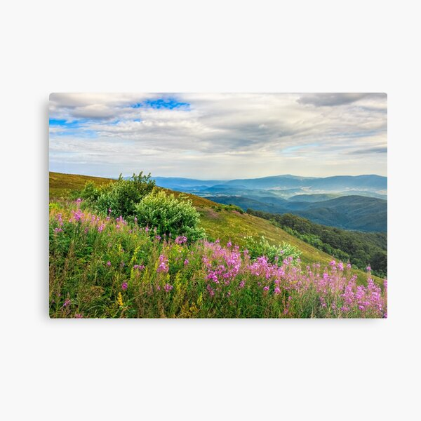 meadow with purple flowers in mountains Metal Print