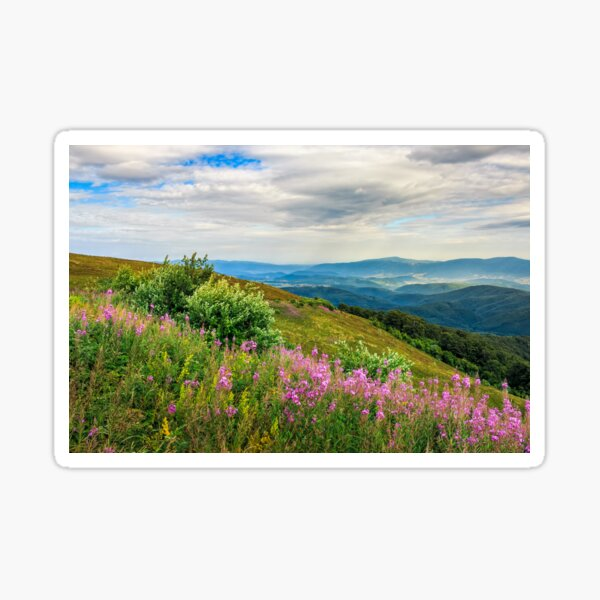 meadow with purple flowers in mountains Sticker