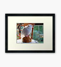 Bun!!!... What Bun? - White Dove - NZ Framed Print