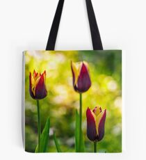 tulip with stripe on shady glade Tote Bag