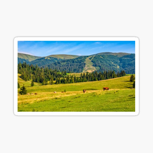few cows grazing on hillside meadow Sticker