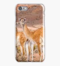 Group of Guanacos at Patagonia, Argentina iPhone Case/Skin