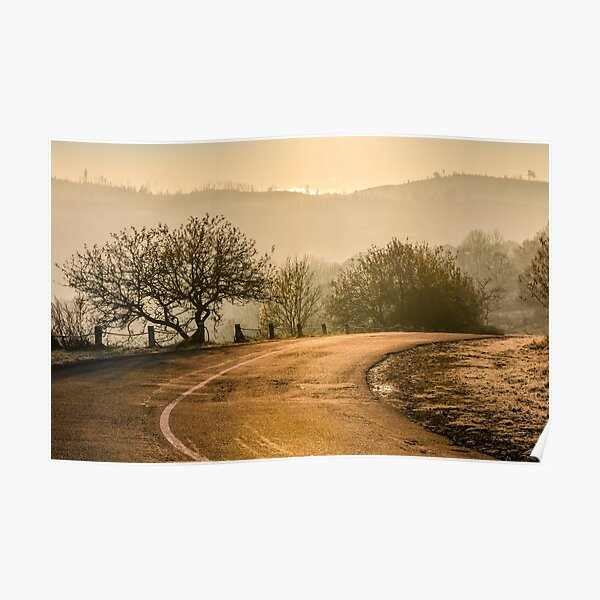 tree by the road in mountains at sunrise Poster