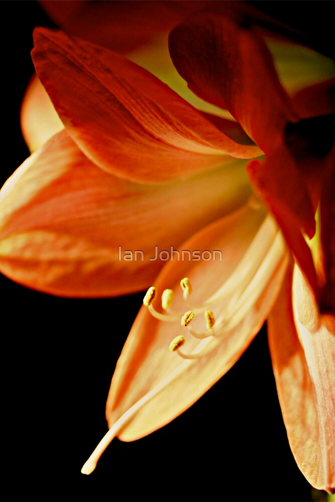 A remembrance of spring by Ian Johnson