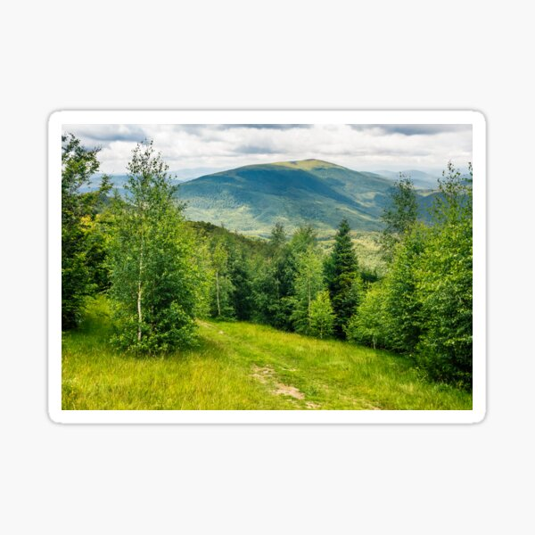 path through the meadow in forest on a hillside in mountains Sticker