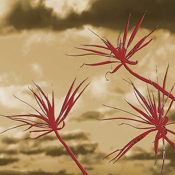 Dancing Leaves - Flame by harryn