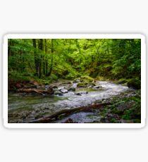 Rapid stream in green forest Sticker