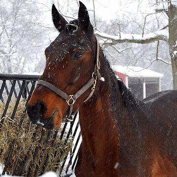 Snowy day by AnnaRose