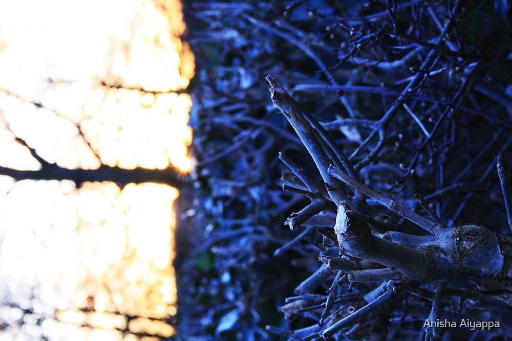 notjustone - the story of wood seventh by Anisha Aiyappa