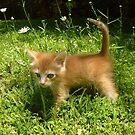 Butterbean the Kitten  by Vivian Eagleson